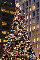 The Christmas tree at night in the Daley Center Plaza; Chicago, IL