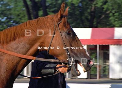 Czaravich, by Nijinsky - popular stakes horse.  Saratoga 1979