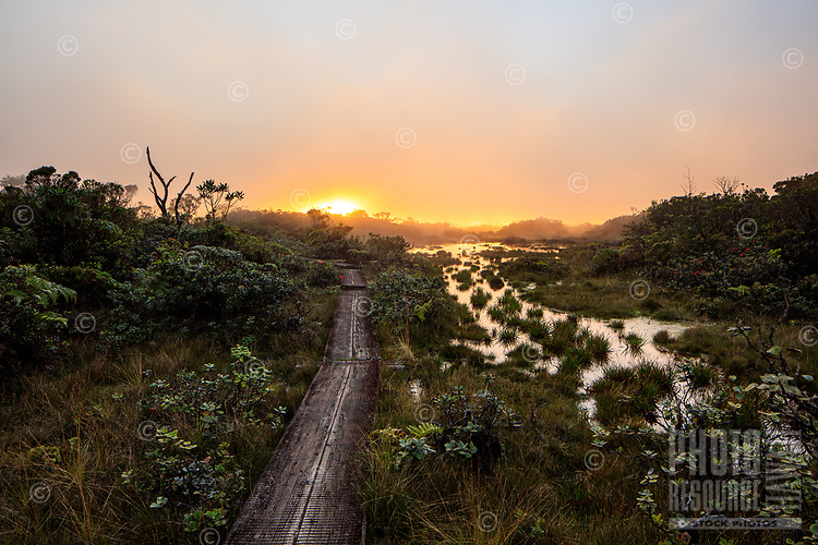The glow of sunset breaks through the mist and clouds above the boardwalk of the Alaka'i Swamp Trail in Koke'e State Park, Kaua'i.