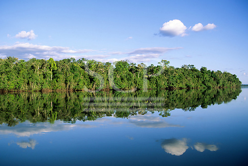 Amazon, Brazil. Forested river bank with perfect reflection of sky with puffy clouds and trees in the river.