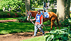 Pearl Bay in the paddock before The Winter Melody Stakes at Delaware Park on 5/20/15