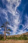 Cirrus Clouds over Mount Elden, Arizona