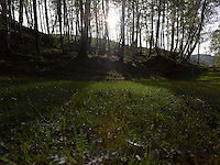 FOREST_LOCATION_90055