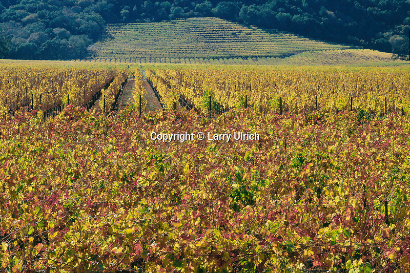 Vineyards along Highway 29<br />