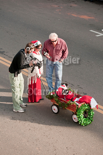 Annual Christmas Parade sponsored by IBCA on Main Street in down town Ione, Amador County, Calif...Eva Tobin with her Boston terriers in a wagon