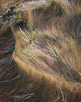Salt marsh grass, Essex, MA