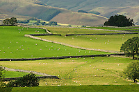 View of stone walls and fields near Shap, Cumbria....Copyright..John Eveson, Dinkling Green Farm, Whitewell, Clitheroe, Lancashire. BB7 3BN.01995 61280. 07973 482705.j.r.eveson@btinternet.com.www.johneveson.com