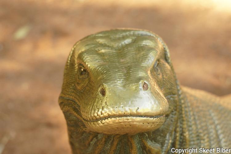 Monitor lizard, Riverbanks zoo, Columbia, SC