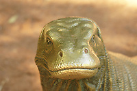 Monitor lizard, Riverbanks zoo, Columbia, SC