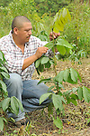 Guama Parcel.Thomas Moran Project.Near Livingston, GuiatemalaFranciso Tzul, Guatemala Program Officer for EcoLogic Development Fund inspects a demonstration Guama Parcel in Thomas Moran Project, near Livingston, Guatemala.   Guama is a large, fast growing species that when sown in rows, between basic grains, spices, and cacao creates shade that eliminates weeds, maintains humidity, fixes nitrogen in the soil, and provides wood that can be used as fuel. By improving soil conditions, it serves to increase crop yields significantly and reduce the search for new areas to cultivate. Moreover, guama increases ground cover and is welcoming to diverse species of birds and other wild animals. Franciso Tzul, a program Officer for EcoLogic Development Fund inspects a demonstration guama Parcel in Thomas Moran Project, near Livingston, Guatemala.   Guama is a fast growing tree species. When sown in rows, between basic grains, spices, and cacao, it creates shade that eliminates weeds, maintains humidity, fixes nitrogen in the soil, and provides wood that can be used as fuel. By improving soil conditions, it serves to increase crop yields significantly and reduces the search for new areas to cultivate. Moreover, guama increases ground cover and is welcoming to diverse species of birds and other wild animals. Franciso Tzul, a program Officer for EcoLogic Development Fund inspects a demonstration guama Parcel in Thomas Moran Project, near Livingston, Guatemala.   Guama is a fast growing tree species. When sown in rows, between basic grains, spices, and cacao, it creates shade that eliminates weeds, maintains humidity, fixes nitrogen in the soil, and provides wood that can be used as fuel. By improving soil conditions, it serves to increase crop yields significantly and reduces the search for new areas to cultivate. Moreover, guama increases ground cover and is welcoming to diverse species of birds and other wild animals.