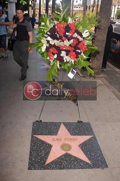 Flowers placed on the Star of June Foray<br />