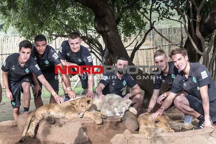 07.01.2019, Broederstroom, Johannesburg, RSA, TL Werder Bremen Johannesburg Tag 05 - Besuch Lion and Safari Park<br /> <br /> im Bild / picture shows <br /> Gruppenbild mit Loewen<br /> <br /> v.li  Jean Manuel Mbom (Werder Bremen #34)<br /> Johannes Eggestein (Werder Bremen #24)<br /> Mario Baric (Videoanalyst Werder Bremen)<br /> Pascal Schichtel (Videoanalyst Werder Bremen)<br /> David Lennart Philipp (Werder Bremen #31)<br /> Luca Plogmann (Werder Bremen #40)<br /> <br /> Foto &copy; nordphoto / Kokenge