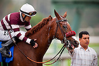 Willa B Awesome, with jockey Martin Pedroza aboard wins the 2012 Santa Anita Oaks at Santa Anita Park in Arcadia California on March 31, 2012.