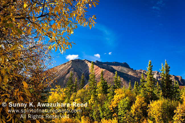 Skookum Volcano with fall colors under blue sky, Nabesna Road, Wrangell - St. Elias National Park & Preserve, Southcentral Alaska, Autumn.