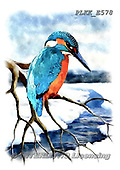 Kris, REALISTIC ANIMALS, REALISTISCHE TIERE, ANIMALES REALISTICOS, paintings+++++,PLKKE578,#a#, EVERYDAY ,birds,kingfisher