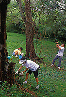 People clearing debris and vines during a volunteer work day at the Hawaii Nature Center in Maikiki