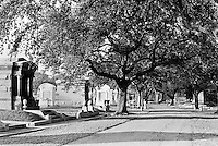 Metairie Avenue, the main road through Metairie Cemetery, passes beneath great live oak trees. In the New Orleans area the water table is too high to bury the dead in the ground. Mausoleums like these are very common.