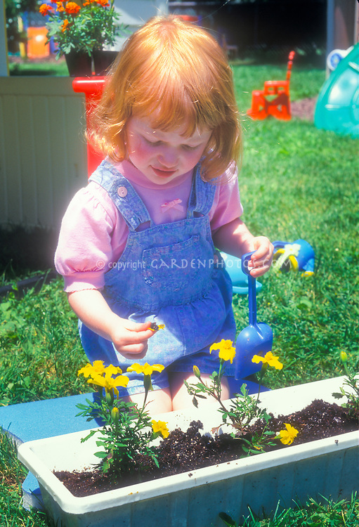 Cute little girl with red hair gardening, blue overalls, pink shirt, learning to garden with yellow marigolds flowers, blue play shovel trowel and runner box of flowers, on lawn