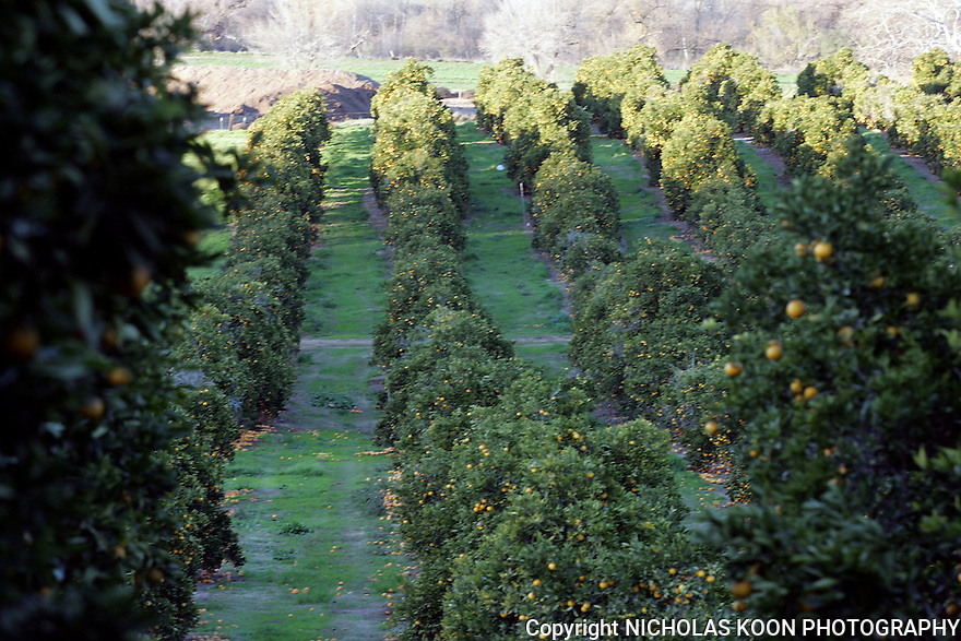 Rainbow Valley Orchards, California.