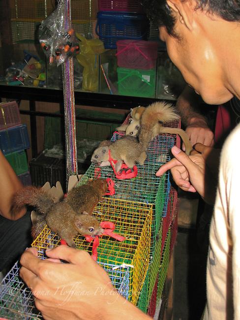 Pet store, Chat a Chuk Market, Bangkok, Thailand