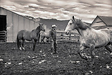 USA, Oregon, Enterprise, Cowboy and Rancher Todd Nash gathers his horses at the Snyder Ranch for a cattle drive in Northeast Oregon