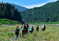 National Park Service Fisheries science team hiking with study equipment onto lakebed of former Lake Mills, now the Upper Elwha River. Olympic National Park, Washington State.