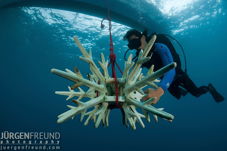 Diver bringing down an artificial reef made of ceramic snowflakes to help rejuvenate the dead reef of El Nido.  The 1998 El Nino caused a massive scale coral bleaching to this tourist town that used to have pristine coral reefs.