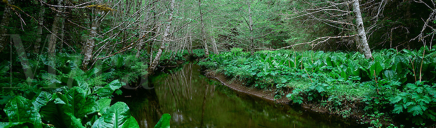 Peterson Creek wanders through alder trees and skunk cabbage on the north end of Douglas Island in southeast Alaska.