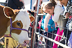Fremont Elementary School students in Carson City, Nev., participate in the cow plop fundraiser, where they were able to meet Buttercup, a Holstein Ayrshire mix.<br />