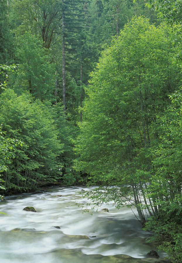 Sulfur Creek, Suiattle River Road, Darrington, Washington