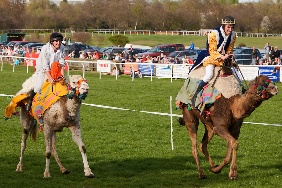Fakenham, Norfolk, England, 10/04/2011..Charity camel racing at Fakenham National Hunt racecourse. Jockeys wearing fancy dress and representing six local pubs took part in three camel races to race funds for the East Anglian Air Ambulance. The winner was Kerry Sumner from the Crown at Gayton, riding a five year old Pintado dromedary called Sahara.