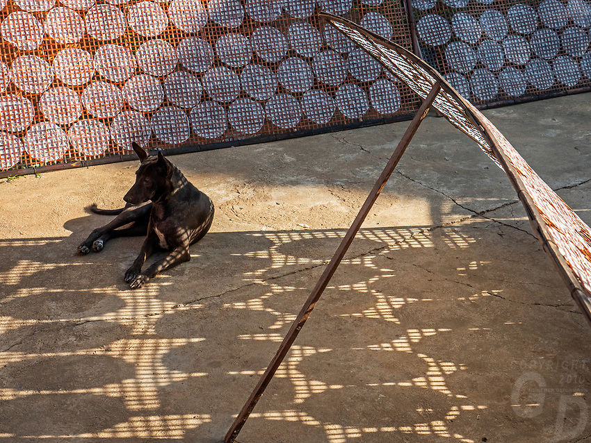Traditional Rice paper production along the rural roads near Battambang is usually done by local families, Battambang. Rice paper is used for making the famous and delicious spring rolls. A dog looking for shade at the drying area of the rice paper