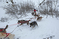 Paul Gebhart's team winds its way around willows in a tight draw in the Rainy Pass area of Alaska Range on his way to Rohn during Iditarod 2009