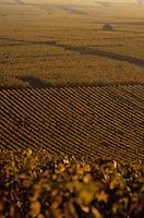 Europe/France/Champagne-Ardenne/51/Marne/Oger: Le vignoble champenois