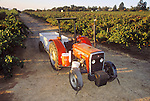 1990 Massey Furguson 240 tractor with grape bins on a trailer, Murrill Vineyards, Sutter Creek, Calif.