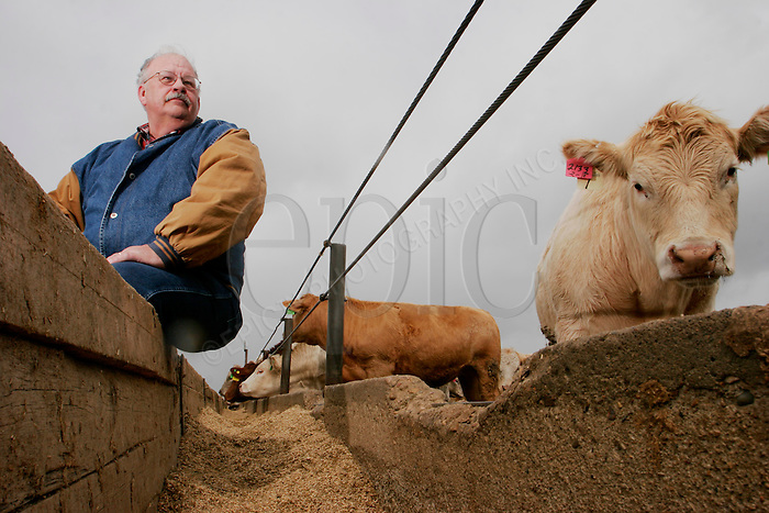 Canadian Cattlemens Association board member Tony Saretsky at his Ponoka, Alta. feedlot on Tuesday May 2n 2006...John Ulan/The Globe and Mail
