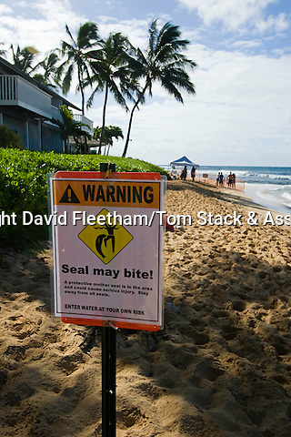 This sign warns tourists of possible dangers with Hawaiian monk seals, Monachus schauinslandi. Underwater encounters with monk seals, (endemic and endangered) are few and far between.  Kauai, Hawaii.