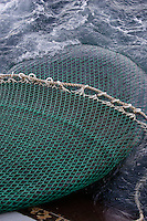 Bulging pelagic trawl being being hauled up onto deck. Barents sea, Arctic Norway