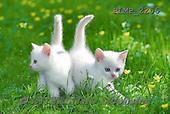 Marek, ANIMALS, REALISTISCHE TIERE, ANIMALES REALISTICOS, cats, photos+++++,PLMP2256,#a#