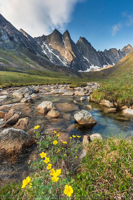 Maiden peak and a small stream with cinquefoil blossoms in the  Arrigetch Peaks, Gates of the Arctic National Park, Alaska