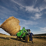 Tractor with hay bales on the farm, isle of wight