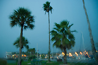 Palm trees at a marina in a tropical storm in Florida.