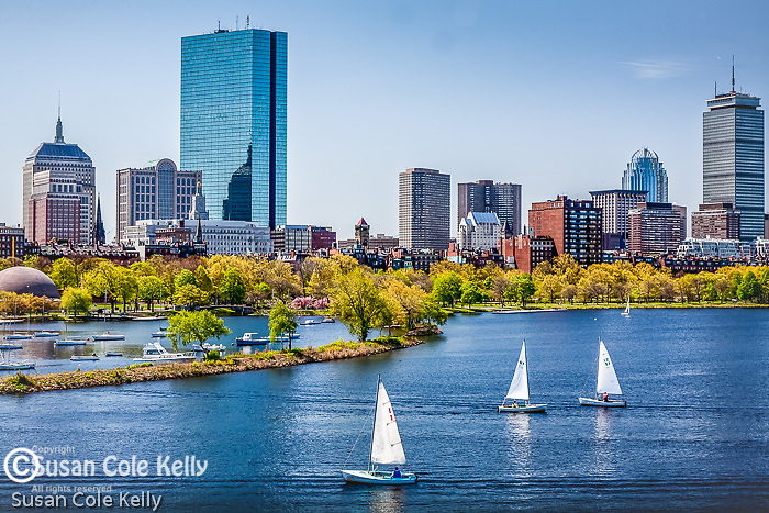 Sailboats in springtime on the Charles River, Boston, MA, USA