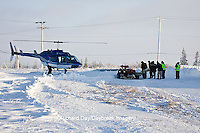 01874-11717 Polar Bear (Ursus maritimus) biologists preparing to airlift bear from Polar Bear Compound, Churchill MB