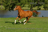 Bob, ANIMALS, horses, photos(GBLA2331,#A#)