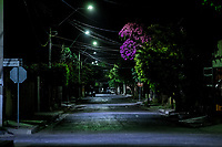 Tree and Bougainvillea at night. Fray Marcos de Niza, Progressive Colony, Hermosillo Sonora<br /> 20May2018. (Photo: NortePhoto.com)<br /> <br /> Arbol y Bugambilias en la noche. Fray Marcos de Niza, Colonia progresista, Hermosillo Sonora