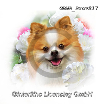 Howard, REALISTIC ANIMALS, REALISTISCHE TIERE, ANIMALES REALISTICOS, paintings+++++Pomeranian,GBHRPROV217,#a#, EVERYDAY ,selfies