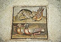 "Roman mosaic with cat and ducks. From the Roman villa on Via Ardeatina, next to Cecchignola, Rome. This Roman mosaic floor panel represents a cat trying to catch a bird in flight and two ducks, one of which is holding a lotus flower in its beak. The style is similar to Hellenistic paintings. The mosaic was found in the triclinium of a Roman villa dating from the first quarter of the 1st century AD and features a central panel using a style known as ""opus Vermiculatum"" or small tiles to give a greater detail to the mosaic. inv 124137 National Roman Museum, Rome, Italy"