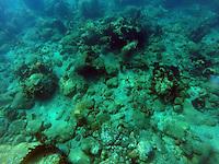 Schnorcheln am Champagne Reef auf Dominica
