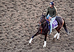 October 31, 2019: Breeders' Cup Filly & Mare Sprint entrant Spiced Perfection, trained by Peter Miller, exercises in preparation for the Breeders' Cup World Championships at Santa Anita Park in Arcadia, California on October 31, 2019. John Voorhees/Eclipse Sportswire/Breeders' Cup/CSM